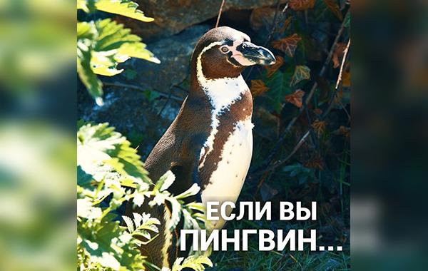 Если вы пингвин…